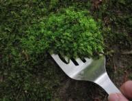 imagen Cómo recoger musgo