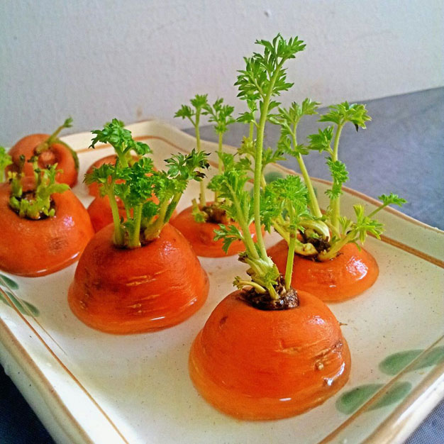 cultivar-zanahoria-comprada-3