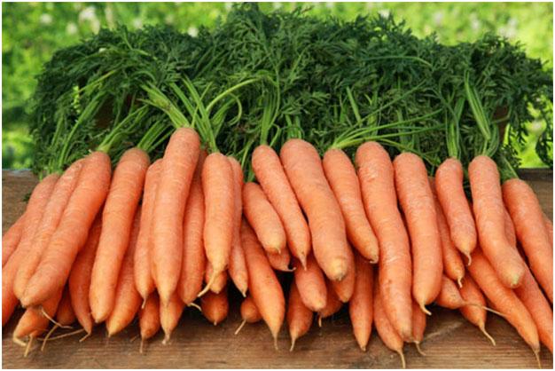 cultivar-zanahoria-comprada