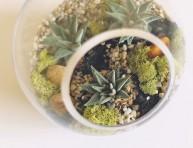 imagen Cómo hacer un pequeño jardín de suculentas