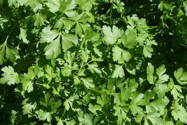 5 hierbas arom ticas para cultivar en interior - Plantas aromaticas interior ...