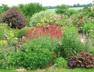 imagen 4 Plantas perennes de rápido crecimiento