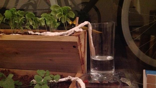 conejos-creativos-jardineria-11