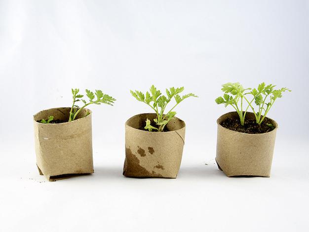 conejos-creativos-jardineria-20