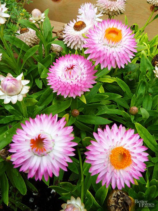 el-xeriscape-un-estilo-de-jardineria-sostenible-08