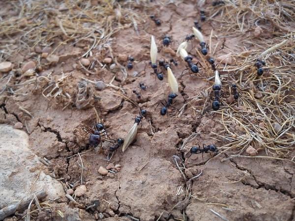 hormigas-amigas-o-enemigas-03.jpg