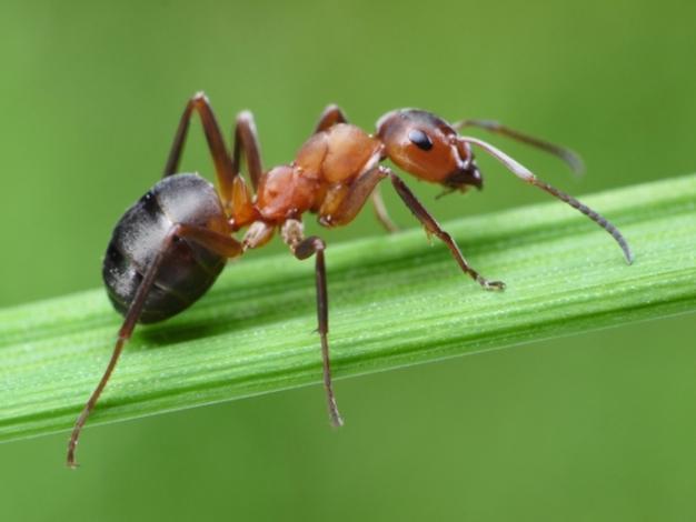 Las hormigas ¿amigas o enemigas?