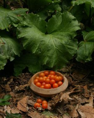 la-poda-vegetativa-del-tomate-02