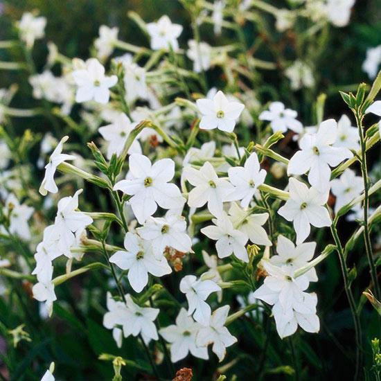 Giardino Piante 8 ProfumateGuida Gradevolmente Fiorite F3l1cJuTK