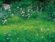 imagen Plantas de bajo mantenimiento para sustituir el césped