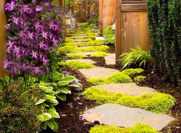 plantas-perfectas-para-caminos-y-senderos-1