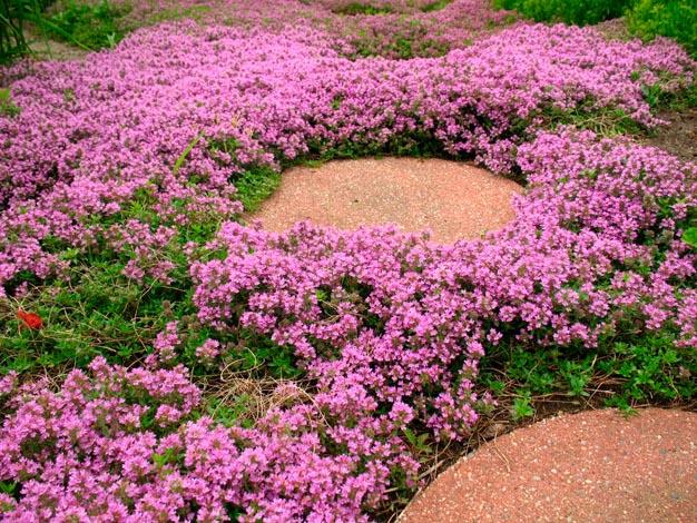 plantas-perfectas-para-caminos-y-senderos-3