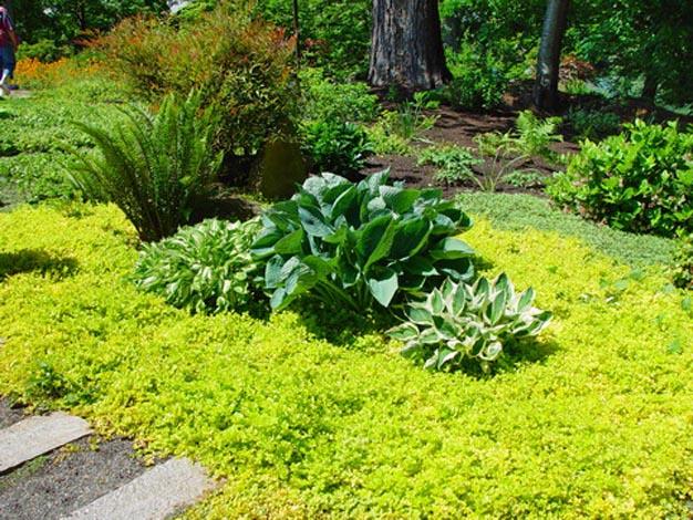 Plantas Rastreras. Good Plantas Tapizantes Resistentes Al Frio With ...