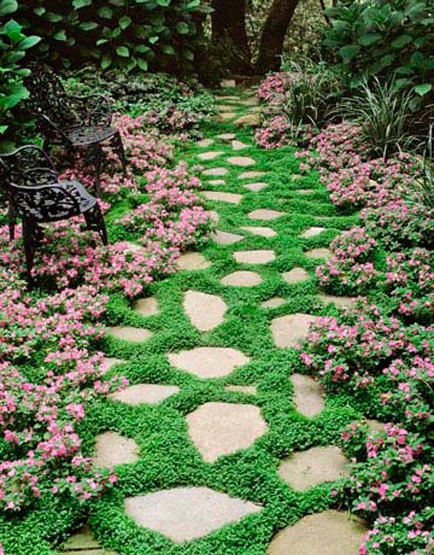 plantas-perfectas-para-caminos-y-senderos-5