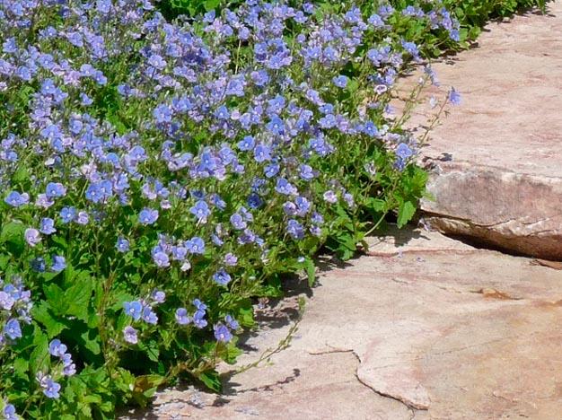 plantas-perfectas-para-caminos-y-senderos-7