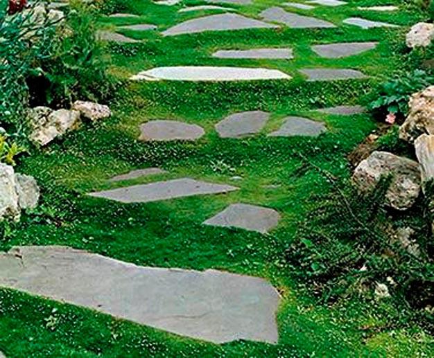 plantas-perfectas-para-caminos-y-senderos-8