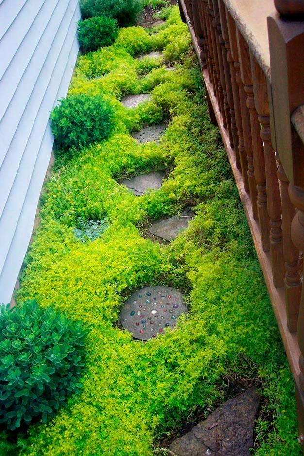 plantas-perfectas-para-caminos-y-senderos-9