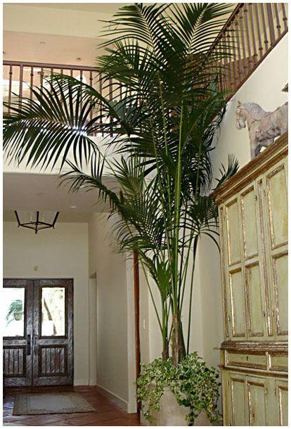 plantas-tropicales-de-interior-1