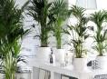 5 plantas de interior ideales para espacios con poca luz Plantas tropicales interior