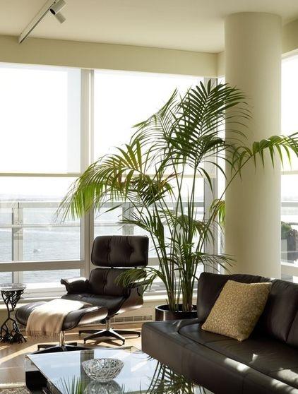 plantas-tropicales-de-interior-2