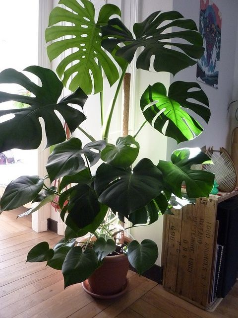 Cultivando plantas tropicales de interior - Plantas tropicales de exterior ...