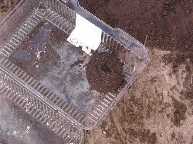 semilleros-de-tierra-12