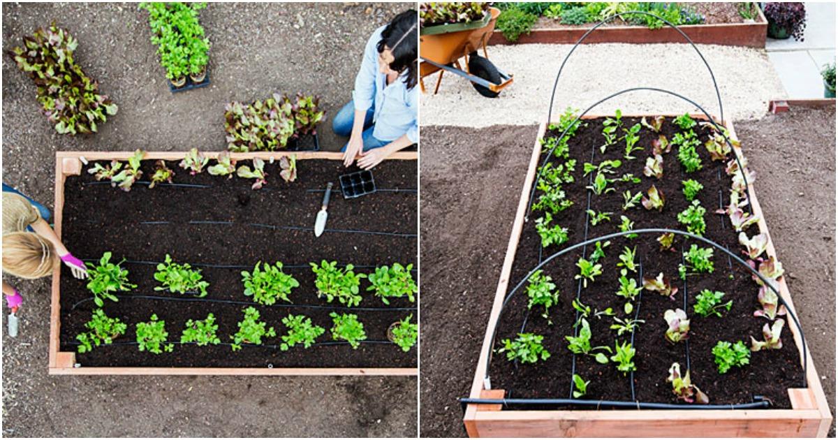 Construye una cama de cultivo paso a paso - Flipboard