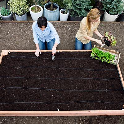 construye-tu-cama-de-cultivo-paso-a-paso-01