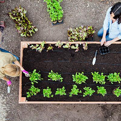 construye-tu-cama-de-cultivo-paso-a-paso-13