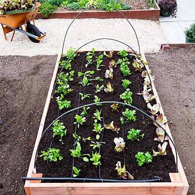 construye-tu-cama-de-cultivo-paso-a-paso-14