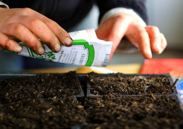 cultivar-pepinos-en-el-balcon-03