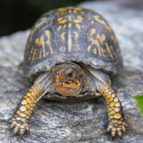 Fauna beneficiosa para tu jard n for Caracol de jardin de que se alimenta
