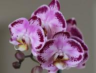 imagen Consejos para iniciarse en el cultivo y cuidado de orquídeas