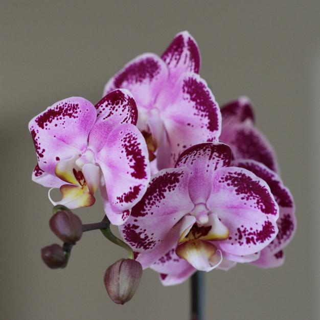orquideas-1