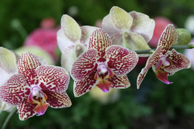orquideas-3