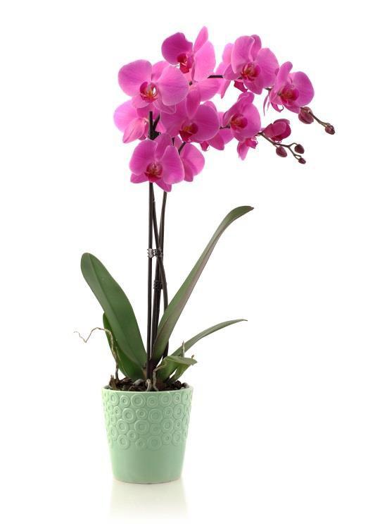 orquideas-4