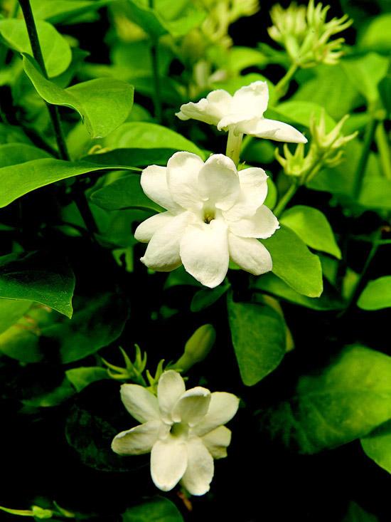 plantas-de-interior-para-perfumar-tu-hogar-02