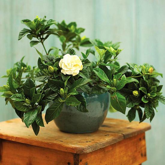 Plantas de interior para perfumar tu hogar for Abono para plantas de interior