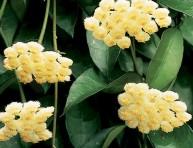 imagen Plantas de interior para perfumar tu hogar