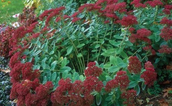 10-tips-para-la-division-de-plantas-perennes-01