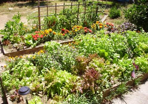 cultivar-plantas-que-repelen-insectos-01