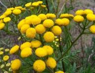 imagen Cultivar plantas que repelen insectos y plagas