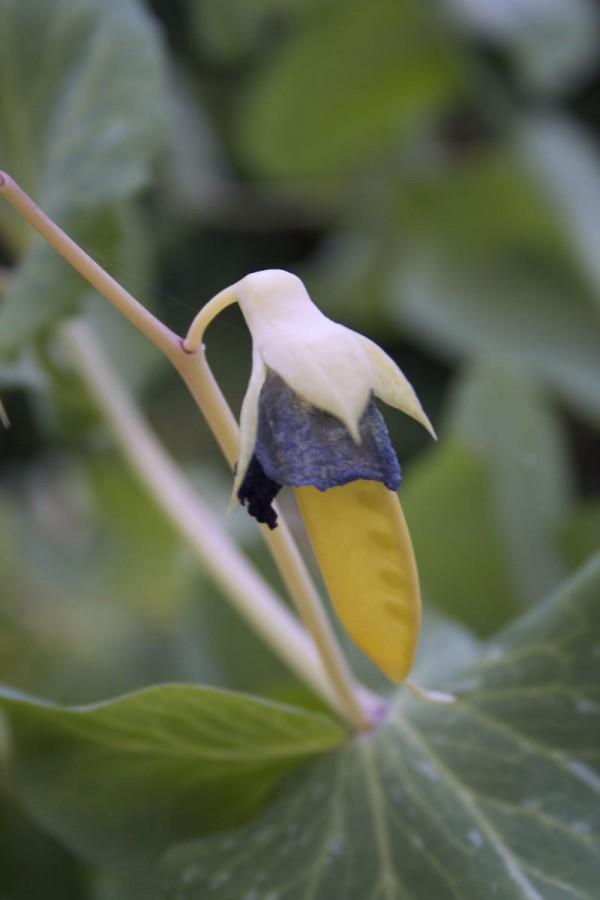 el-tirabeque-amarillo-05