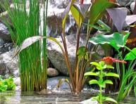 imagen Las mejores plantas para tu estanque