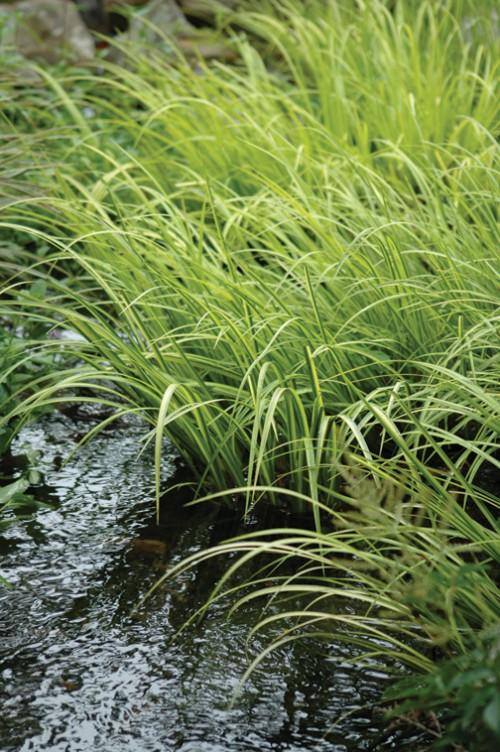 las-mejores-plantas-para-su-estanque-07