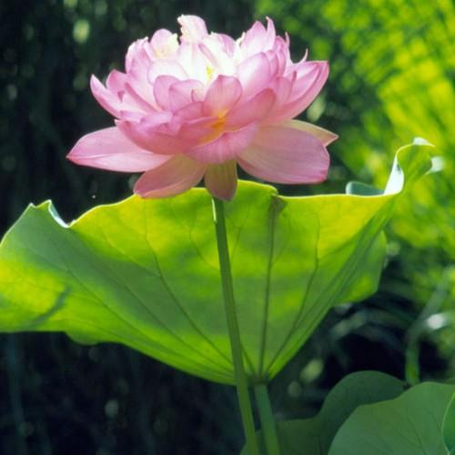 las-mejores-plantas-para-su-estanque-09