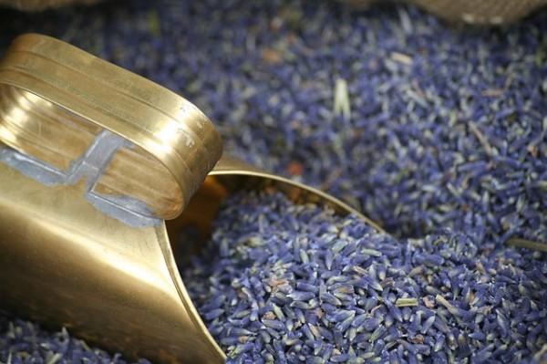 lavender-537851_640