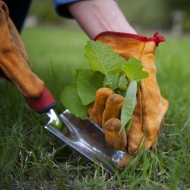 vinagre herbicida 1