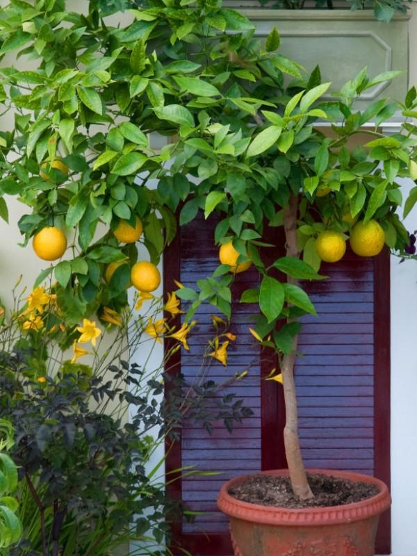 plantas-que-no-esperarias-ver-en-macetas-04