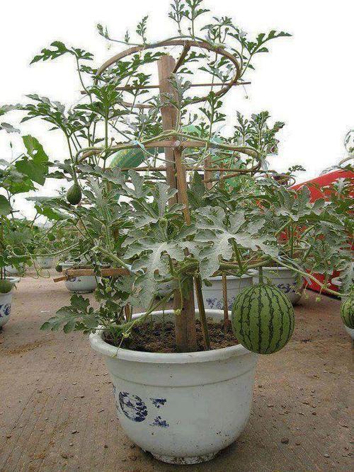 plantas-que-no-esperarias-ver-en-macetas-05
